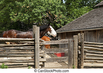 horse behind a fence