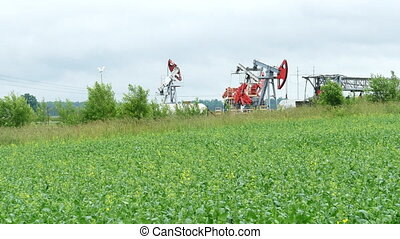 Working Oil Pump Jack in a Rapeseed Field