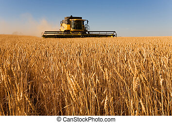 Working the harvest