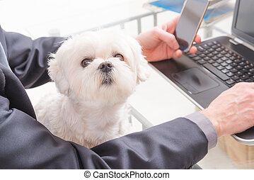 Working with dog in the office
