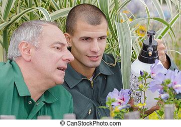 workingmen spraying insecticide the garden