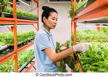 workwear, メスのアジア人, 実生植物, 手袋をしている, 心配, 取得, 緑, 若い
