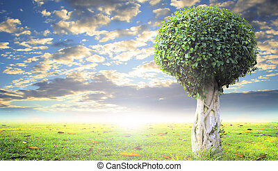 World environment day concept: tree with new leaf growth in...