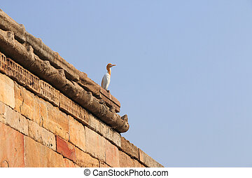 world heritage ancient site champaner,bird on wall