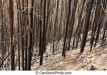 World heritage forests of Madeira terribly destroyed