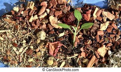 World of Tea, Leaves