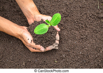 World soil day concept. Hand with green young plant growing in soil on nature background. planting trees back to the forest, Creating awareness for love wild, Wild plant concept.
