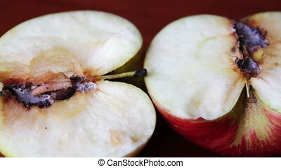Worm Crawls out of the Tainted Apple - Big fat worm crawling...