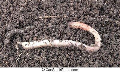 Worm - Film worm 7 syuzhetov. syuzhet2