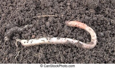 Worm - Film worm 7 syuzhetov.syuzhet2