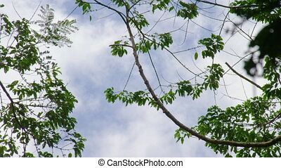 Worms eye view of the sky with branches of trees. - A worms...
