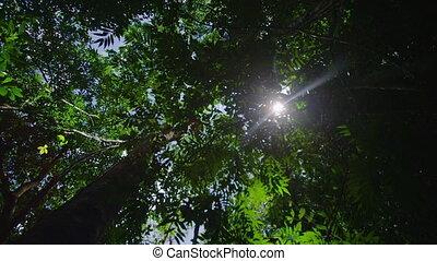 Worms eye view of trees - A worms eye view of trees. Leaves...