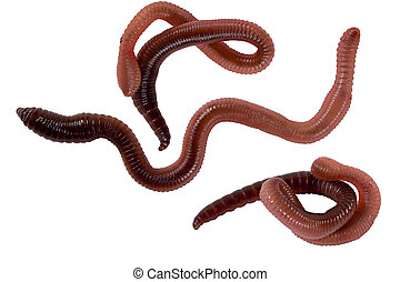Isolated earth worms