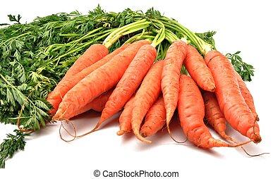 wortels, bos