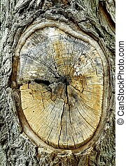 WOUNDED TREE - A section of a tree from which a limb has...