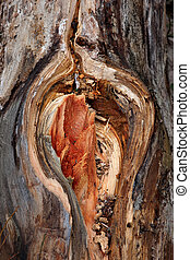 Wounded tree trunk
