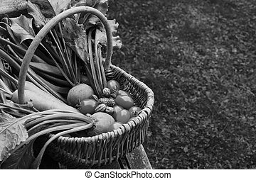 Woven basket filled with freshly harvested vegetables from an allotment