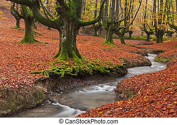 wpaść, przedimek określony przed rzeczownikami, las