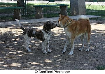 wprowadzając, park, pies, psy