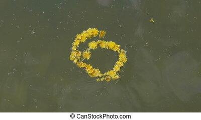 Wreath of dandelion flowers floats on water.