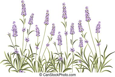 Wreath of lavender flowers. - Wreath of lavender flowers in...