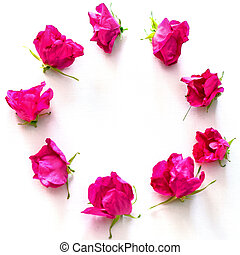 Wreath of Pink Tea roses on the white background - Wreath of...