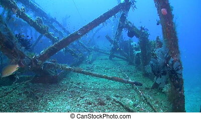 Wreck with plenty fish. Wreckdiving in Philippines.