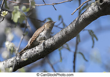 wren bird on tree