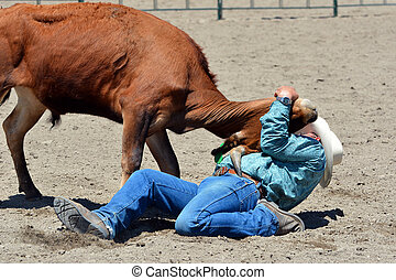 Wrestling a steer to the ground - Cowboy wrestling a steer...