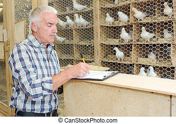 writing the breeds of pigeon