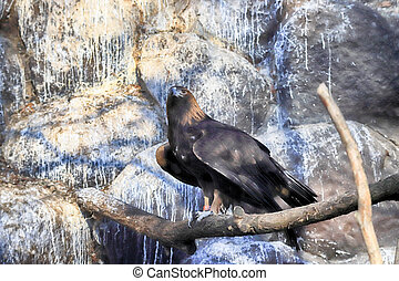 WROCLAW, POLAND - JANUARY 21, 2020: Hawks are a group of ...