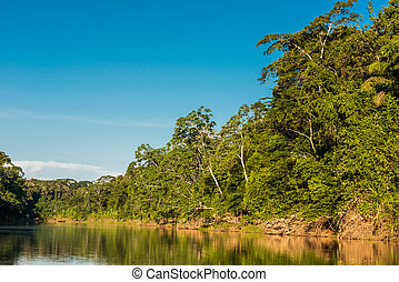 wrzosiec, rzeka, peruwiański, amazon dżungla, madre, od, dios, peru
