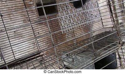 wsadzony do klatki, królik, króliki, zając