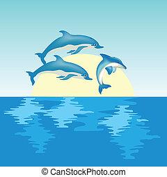 wschód słońca, delfiny