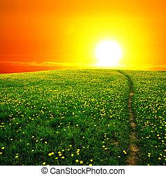wschód słońca, mniszek lekarski, pole