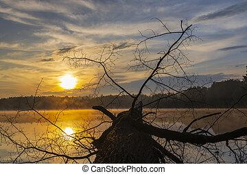 wschód słońca, słońce, republika, trebon, staw, na, czeski