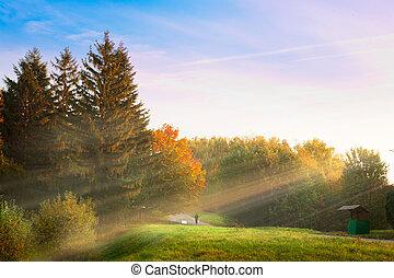 wschód słońca, w, przedimek określony przed rzeczownikami, jesień, park