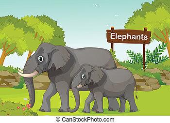 wstecz, słonie, drewniany, dwa, poznaczcie deskę