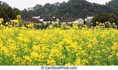 wuyuan75.mov - beautiful old village in China