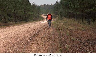 wycieczkowicz, droga, słupy, las, hiking