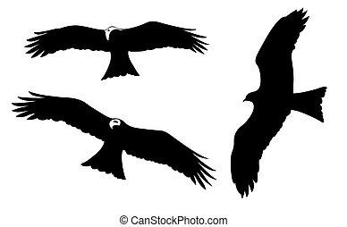 wygłodniały, ptaszki, na białym, tło, wektor, ilustracja