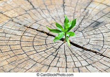 wynurzanie się, pojęcie, środek, powodzenie, sadzonka, drzewo, rodząc, zmarły, business., przewodnictwo, pień, rozwój, nowy, silny, pniak