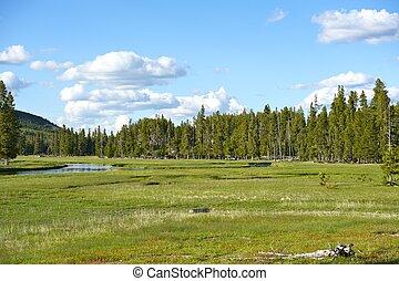 Wyoming Summer Scenery