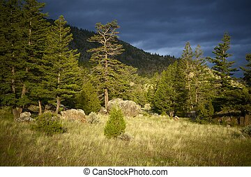 Wyoming Wilderness. Large Stones in the Forest. Wyoming...