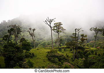 wysoki, chmura, las, drzewa