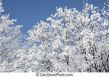 wysoki, tatras, slovakia, drzewa, śnieżny