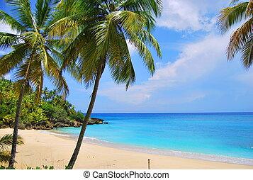wyspa, karaibski