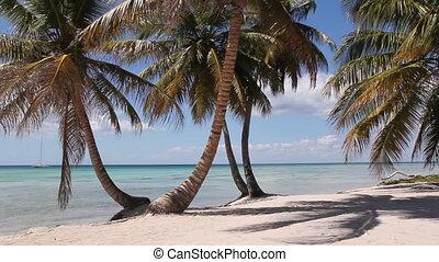 wyspa, plaża., pustynia