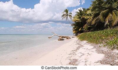 wyspa, plaża., wide., pustynia