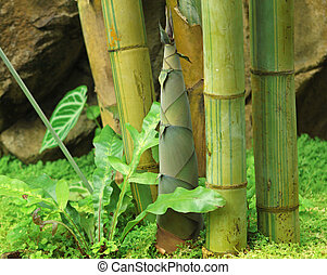 wystrzelić, od, bambus, w deszczu, las